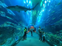 Holiday with Kids in Dubai-6 Amazing Places to See
