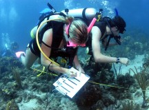 Top Marine Biology Colleges in the US