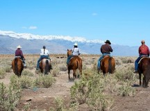 Ensure You Have Fun and Stay Safe on a Ranch Visit