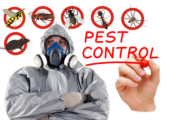 Forex pest control