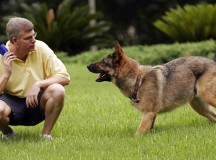 3 Ways to Train your Dog to Attack a Stranger