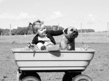 5 Tips For Introducing Your Dog To A New Family Member