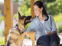 8 Essentials To Make Dog's Life Easier