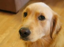 4 Reasons Why Getting a Pet Dog Is a Good Idea
