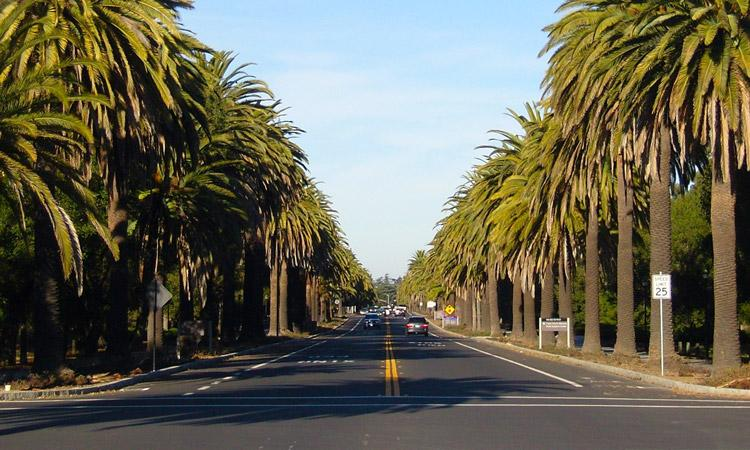 Travel Tips to Palo Alto, CA