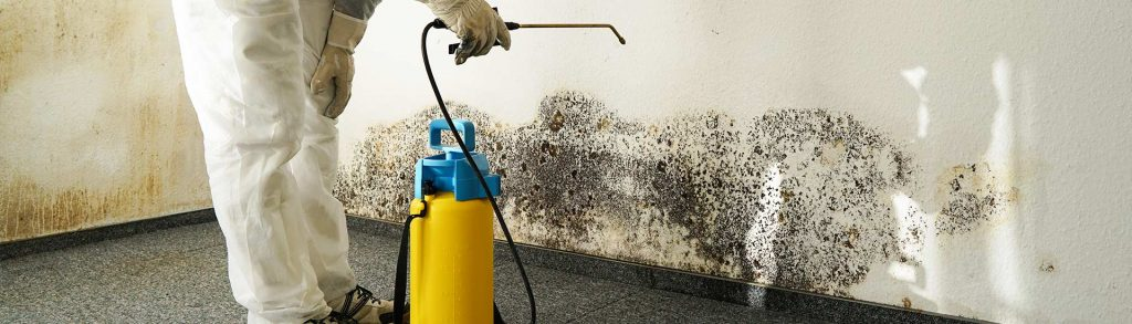 Practical Ways to Remove Mold From Your Home