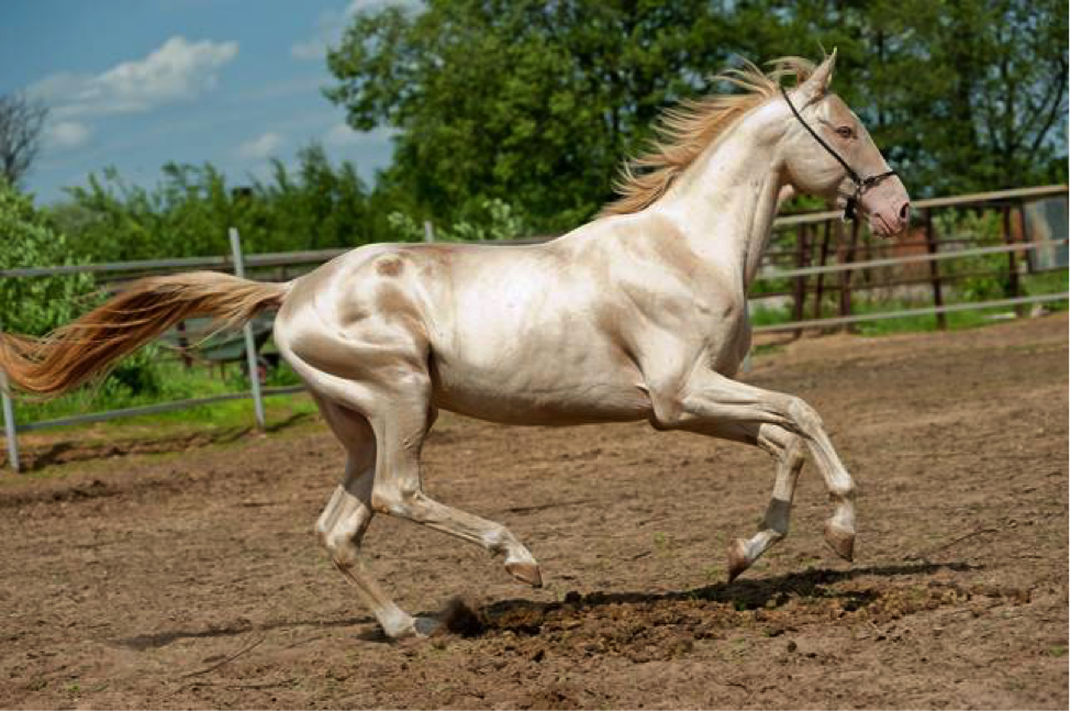 Cute Horse Breeds to Keep as Pets
