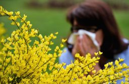 How to Survive the Allergy Season