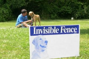 Can an Invisible Dog Fence Keep your Dog Safe?