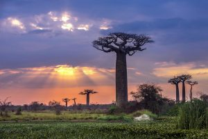 Reasons to Travel to Madagascar