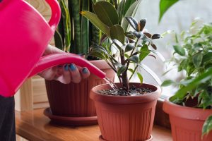 Beginner's Guide on How to Take Care of Houseplants