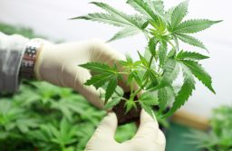 What Condition is Weed Most Helpful For