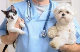 The Rise of Mobile Veterinarian Services in Philadelphia